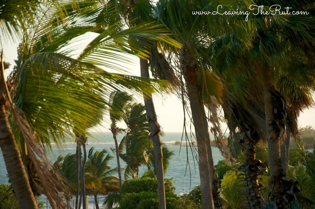 PonceHotelViewPalmTrees