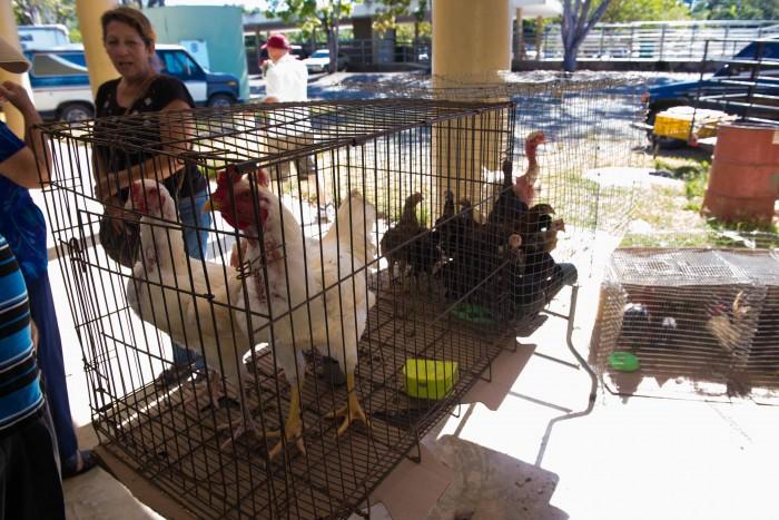 San Sebastian Farmers Market-3