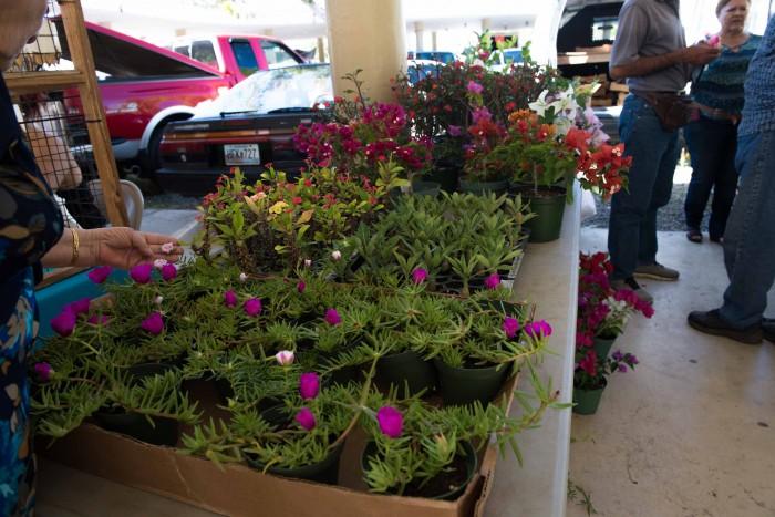 San Sebastian Farmers Market-5